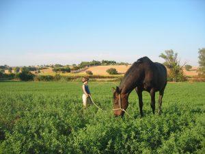 Giacomo con un nostro cavallo